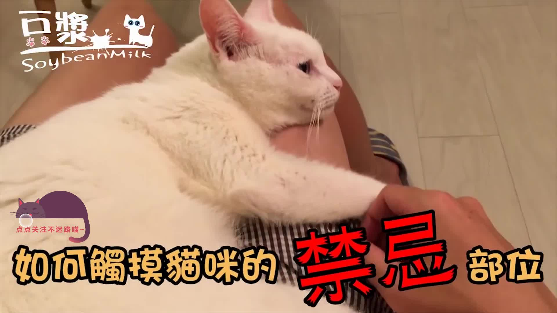 想摸猫咪肉球总被凶?这样做不光不被凶,还可以为所欲为!