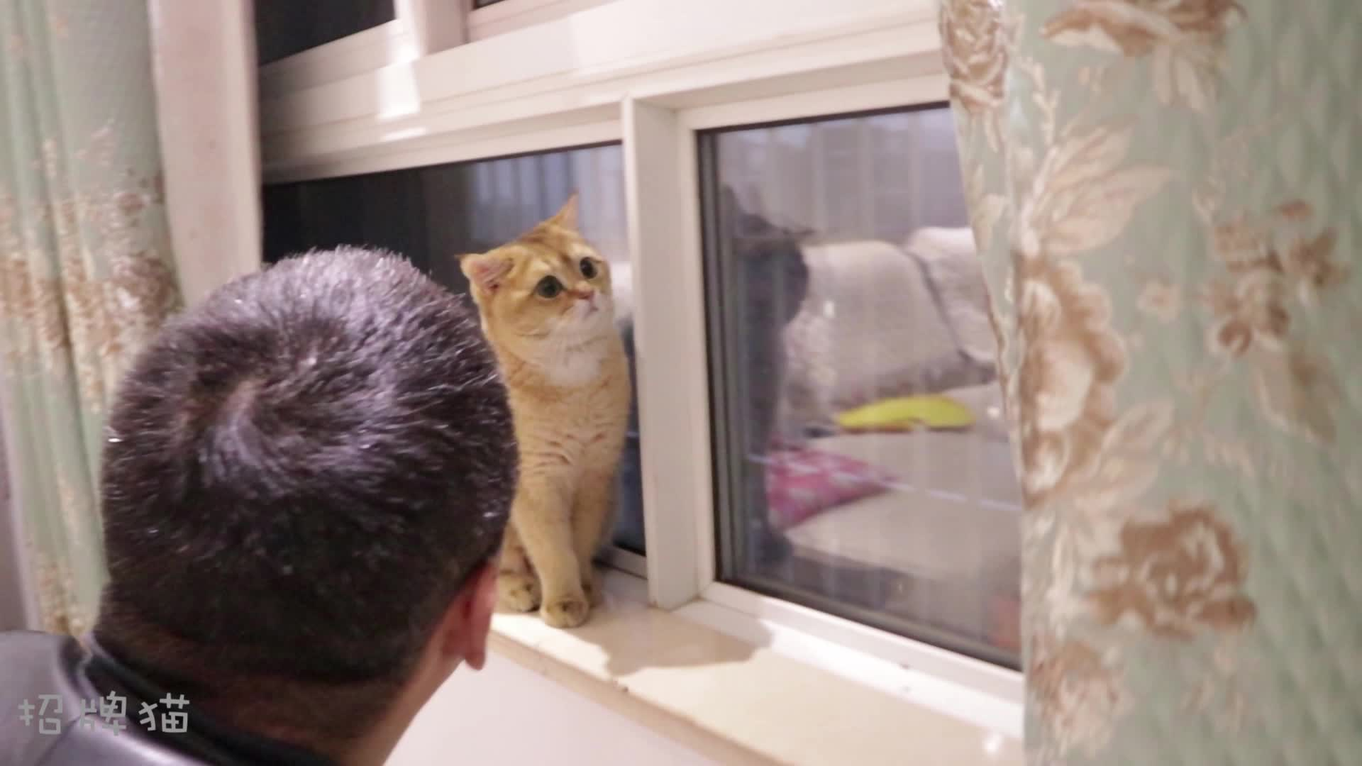 我爸试图用猫语和猫对话,猫:你说的是什么鸟语?