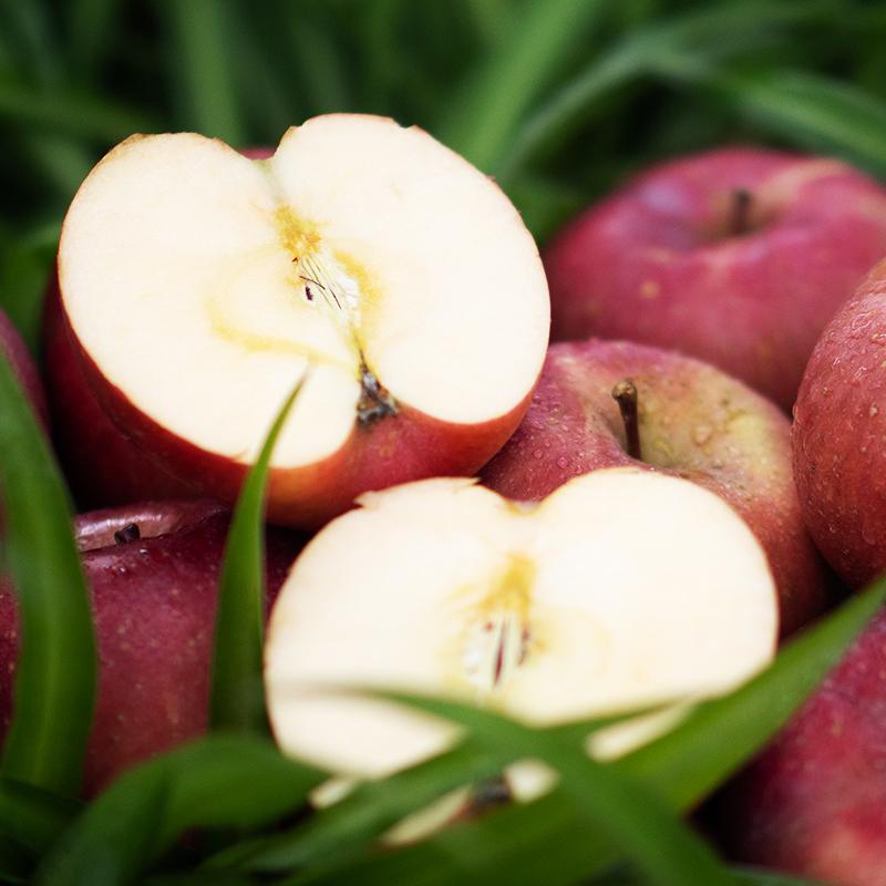 【坏果包赔】阿斯牛牛大凉山丑苹果3斤/5斤/8斤包邮华力